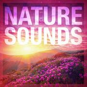 Relaxing Zen Nature Radio