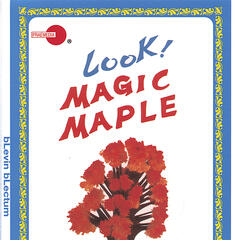 Magic Maple