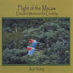 Flight of the Macaw: Embodied Meditation for Creativity