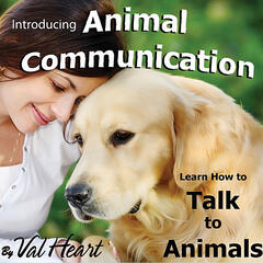 Introducing Animal Communication