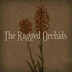 The Ragged Orchids