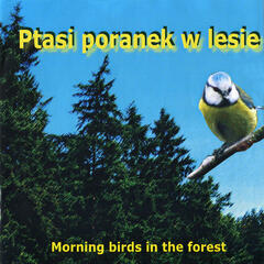 Morning birds in the forest