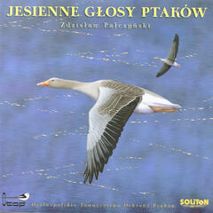 Autumn Bird Voices, Jesienne Glosy Ptakow