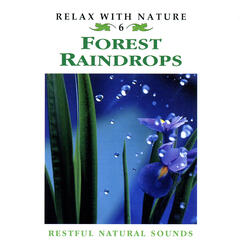 Forest Raindrops - Relax With Nature 6