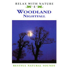 Woodland Nightfall - Relax with Nature