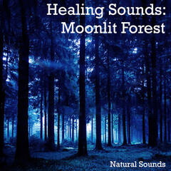 Healing Sounds: Moonlit Forest