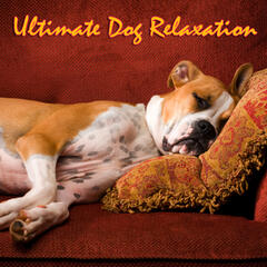 Ultimate Dog Relaxation