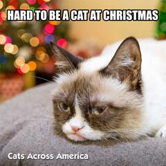 Hard to Be a Cat at Christmas (Radio Edit)
