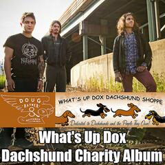 What's up Dox Dachshund Charity Album