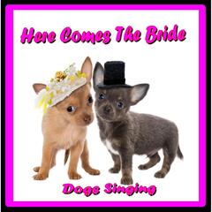 Here Comes the Bride (Dogs Singing)