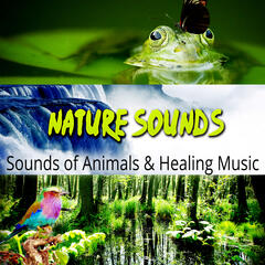 Nature Sounds - Sound Effects and White Noise for Meditation, Sleep, Spa, Yoga, Relax, Spring Awakening & Birds, Reduce Stress, Sounds of Animals & Healing Music, Waterfall Sounds