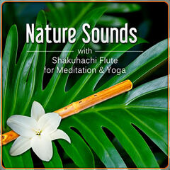 Nature Sounds with Shakuhachi Flute for Meditation & Yoga – The Ultimate Ambient Zen Flute Music for Relax and Stress Management