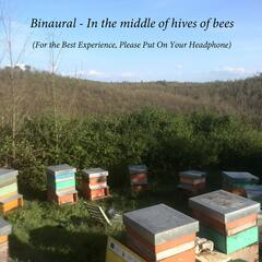 Binaural: In the Middle of Hives of Bees
