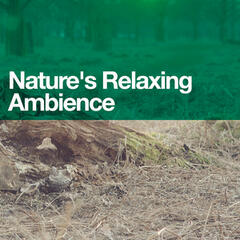 Nature's Relaxing Ambience