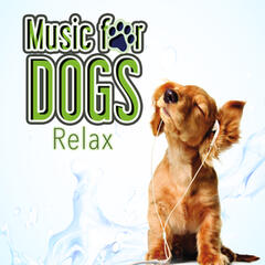 Music for Dogs (Relaxation)