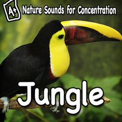 Nature Sounds for Concentration - Jungle