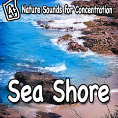 Nature Sounds for Concentration – Sea Shore