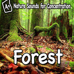 Nature Sounds for Concentration - Forest