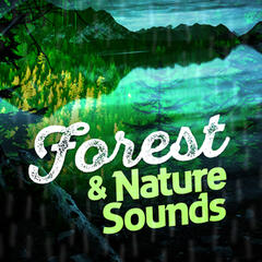 Forest & Nature Sounds