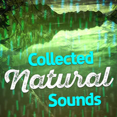 Collected Natural Sounds
