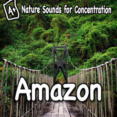 Nature Sounds for Concentration - Amazon