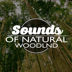 Sounds of Natural Woodland
