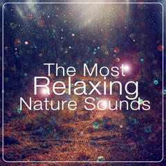 The Most Relaxing Nature Sounds