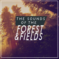 Sounds of the Forest & Fields