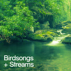 Birdsongs and Streams