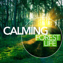 Calming Forest Life