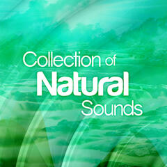 Collection of Natural Sounds