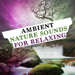 Ambient Nature Sounds for Relaxing