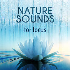 Nature Sounds for Focus