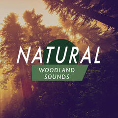 Natural Woodland Sounds