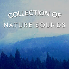 Collection of Nature Sounds