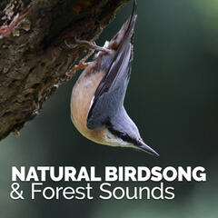 Natural Birdsong & Forest Sounds