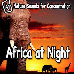 Nature Sounds for Concentration – Africa at Night