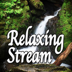Relaxing Stream (Nature Sounds)