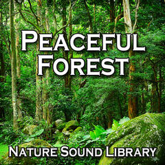 Peaceful Forest (Nature Sounds for Deep Sleep, Relaxation, Meditation