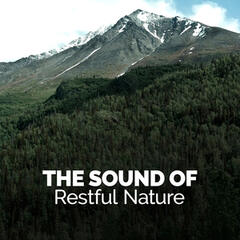 The Sound of Restful Nature