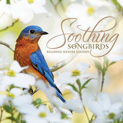 Soothing Songbirds