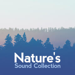 Nature's Sound Collection