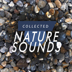 Collected Nature Sounds