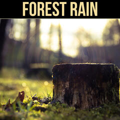 Forest Rain - Soft Falling Rain, Relaxing Melody, Restful Sounds, Calm Music for Sleep, Deep Sound for Relaxation, Serenity Music Reduce Sadness, Pure Water Sound