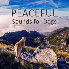 Peaceful Sounds for Dogs - Gentle Nature Sounds for Puppies & Cats, Calm Down Your Animal Companion