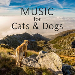 Music for Cats & Dogs -  Serene Nature Sounds for Stressed Puppies & Cats, Relax Your Animal Companion