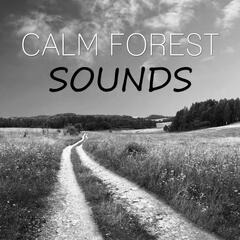 Calm Forest Sounds – Quiet Sounds for Long Sleep, New Age Music and Nature Sounds for Stress Relief, Healing Through Sound and Touch