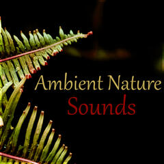 Ambient Nature Sounds – Ocean Waves & Pure Nature Sounds, Water & Rain Sounds, Flute Music for Relaxation