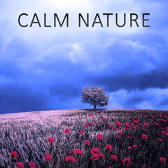 Calm Nature – Ocean, Sounds of Nature, Relaxation, Birds, Calm Music, Soft Nature