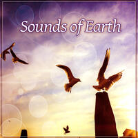 Sounds of Earth – Rainfall, Jungle, Animals, Planet, Closely, Soul, Activity, Green Energy, Pure, Relax